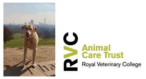 Royal Veterinary College Animal Care Trust Blog Page
