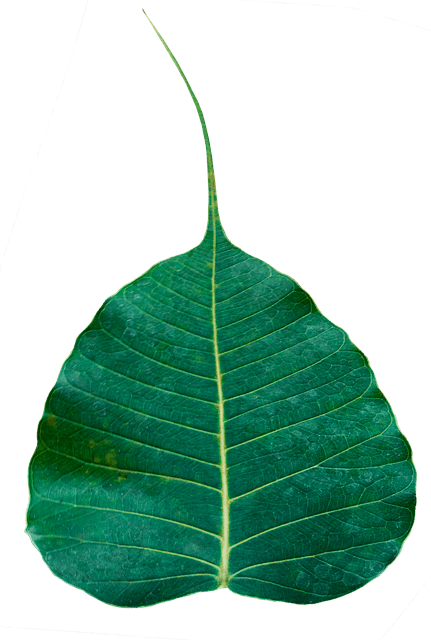 The Leaf of the Bodhi Tree - Gthic.com - Blog