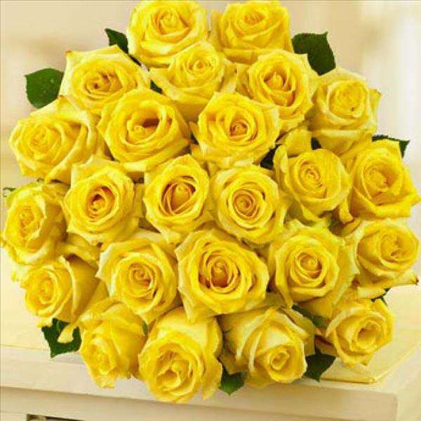 20 Yellow Rose