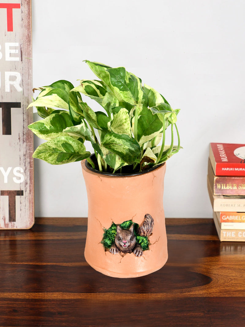 Varigated Money Plant with Squirrel Resin Pot