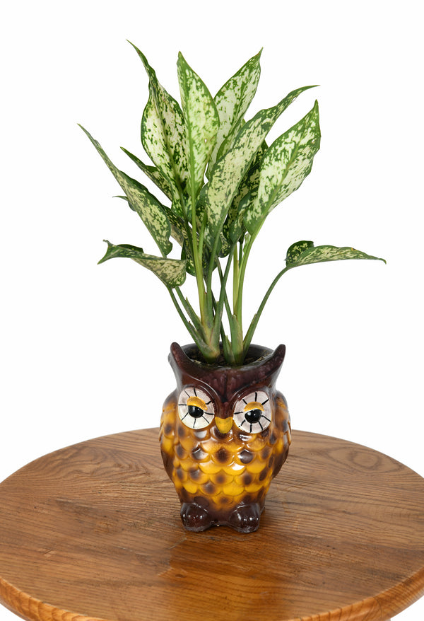 Silver Aglaonema with Owl shaped Vase
