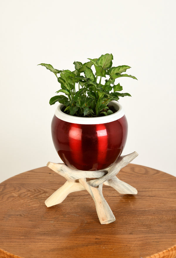 Syngonium Plant with Metal Pot and Handmade Stand