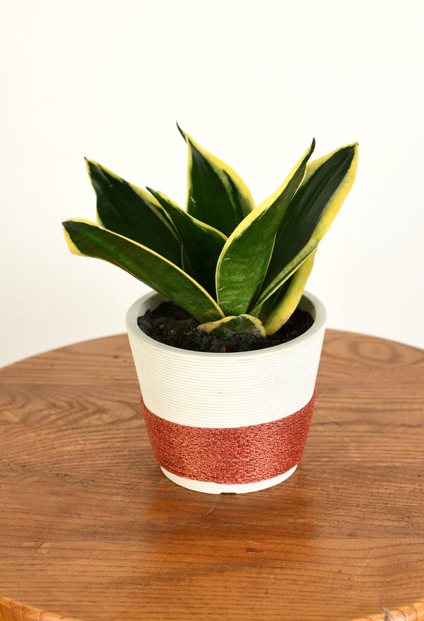 snake plant, air purifying plant fancy pot unbreakable pot