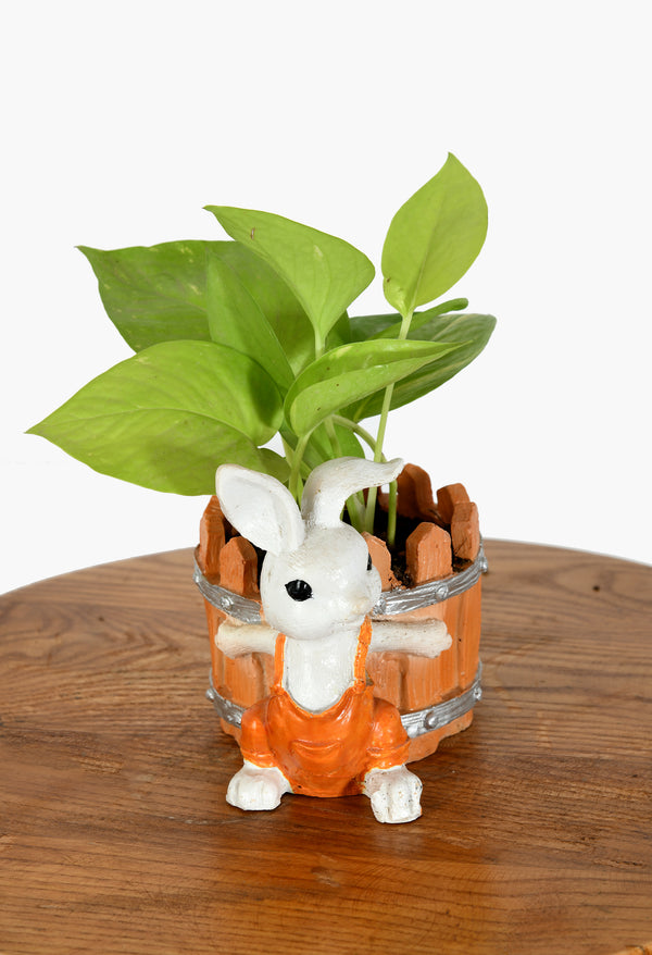 Money Plant with Cute Rabbit Pot
