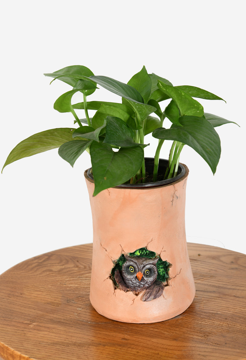Money Plant with Owl Resin Pot