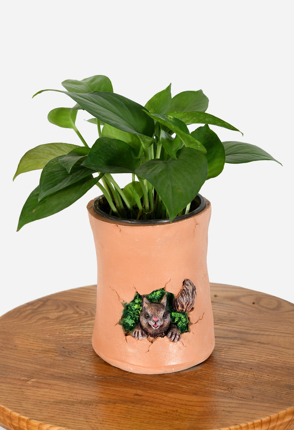 Money Plant with Squirrel Resin Pot