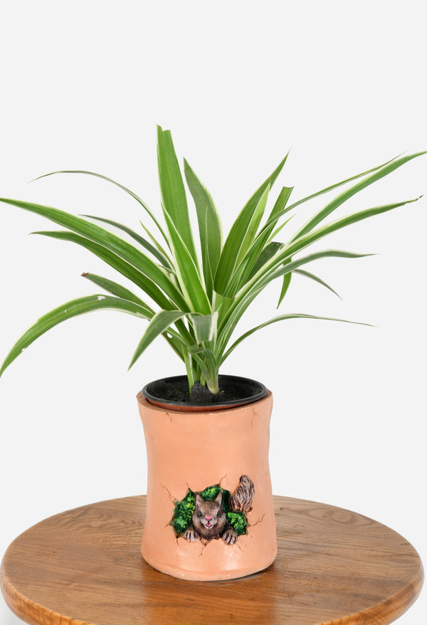 Spider Plant with  Squirrel Rasin Pot