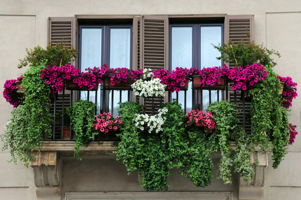 Blooming Balcony