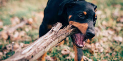 How To Stop Your Pet from Chewing & Destroying Stuff