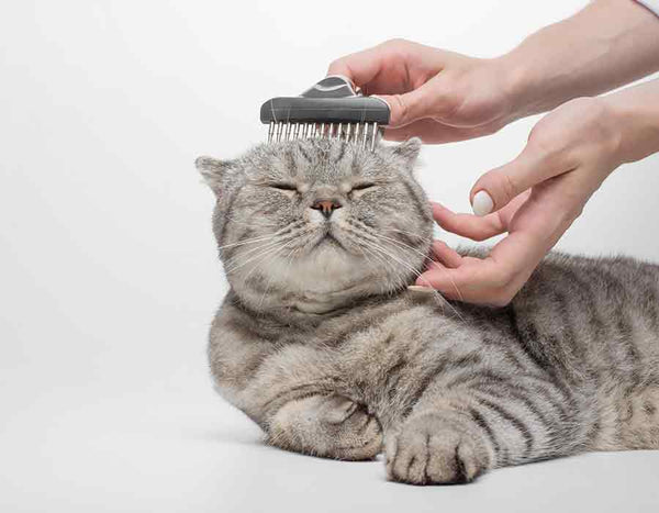 Pet Cat Hair Grooming and Cleaning Cats Hair Removal Health