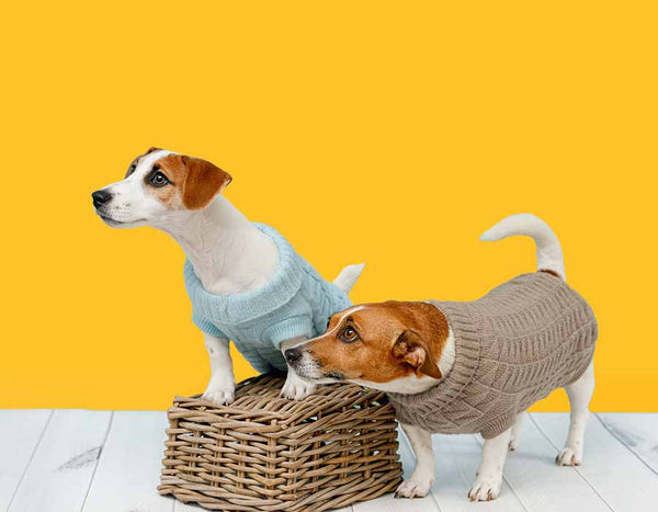 Jack Russell Terrier Dogs Pet Dog Clothing Cute JRT Pets Clothes