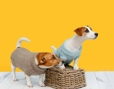 Jack Russell Terrier Dogs Pet Dog Clothing Shop Cute JRT