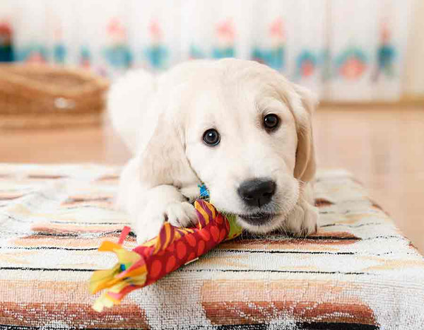 Pet Dog Fun Play Toys Rope Chewing Toy Chew Bone Stick Pets Dogs