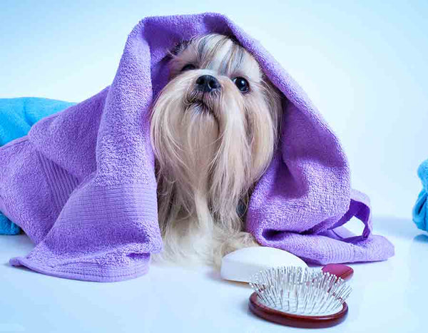 Fluffy pet dog hair grooming, cleaning and care products