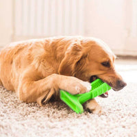 Beautiful golden retriever pet dog chewing on his dogs toothbrush chew toy