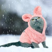 Cute Grey Cat In Snow Wearing Warm Winter Hoodie For Cats And Small Dogs Pets