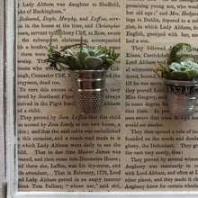 Load image into Gallery viewer, Thimble Succulents 10