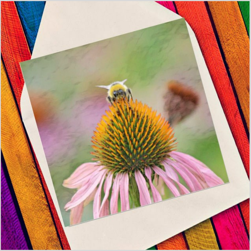 Bee on echinacea - Eco Friendly Card