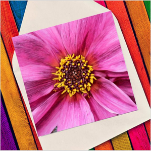 Close up pink flower - Eco Friendly Card