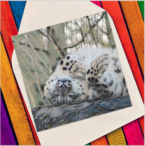Playful snow leopard - Eco Friendly Card