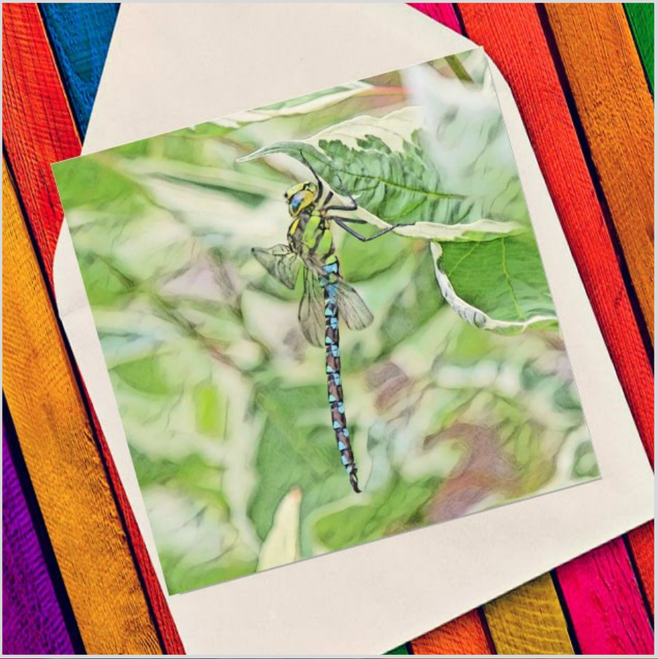 Dragonfly - Eco Friendly Card