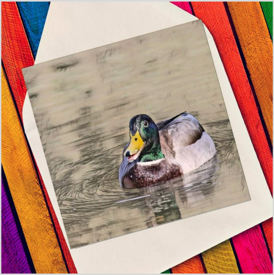 Duck in pond - Eco Friendly Card
