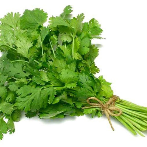 Cilantro Bundle