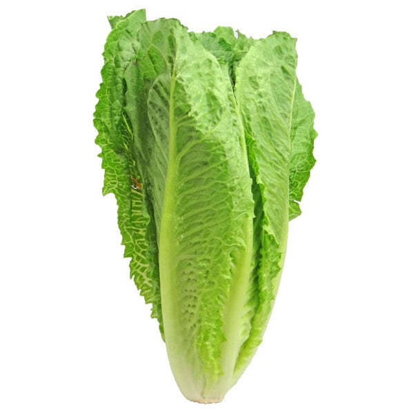 Romaine Lettuce Head 1 ct.