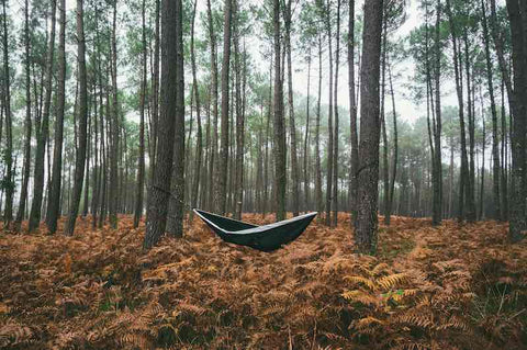 Hammock in thick forest