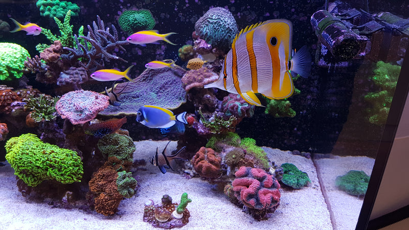 Aquarium Supplies and Aquarium Service by Dallas Aquarium Experts