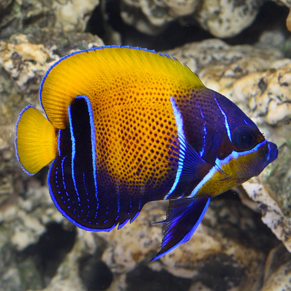 Online Aquarium Sales and Aquarium Service