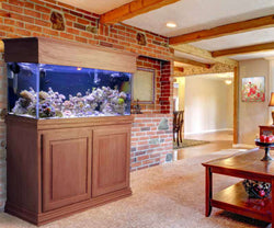 Saltwater Aquarium by Dallas Aquarium Experts