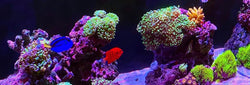 Online Aquarium Supplies and Aquarium Maintenance Services within DFW