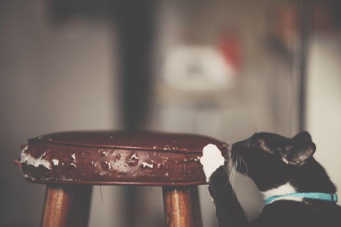 How Can I Stop My Cat From Scratching My Couch? Top 5 Tips And Tricks To Stop Your Cat From Destroying Your Furniture