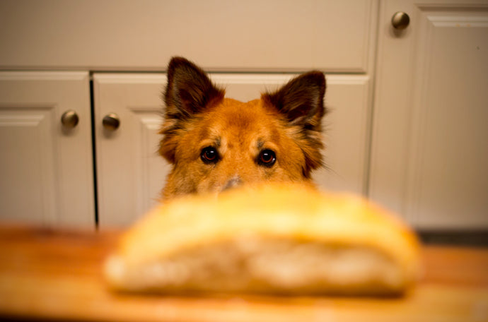 What Foods Are Bad For Dogs? 5 Human Foods You Should Never Feed Your Dog