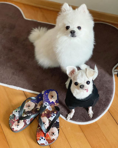 Yeti and Dobby sitting next to a pair of custom night sky dog face flip flops