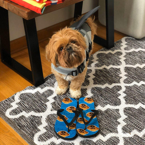 Turkey the Shih Tzu next to a pair of custom aloha beach dog face flip flops