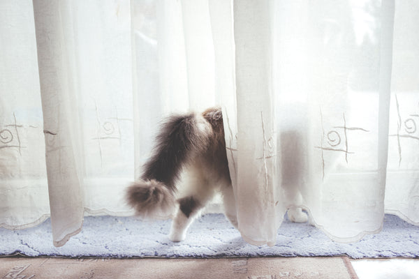 cat hiding behind curtains