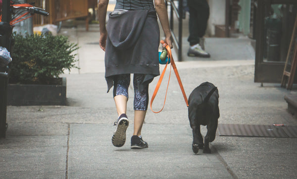 dog on a walk with female human