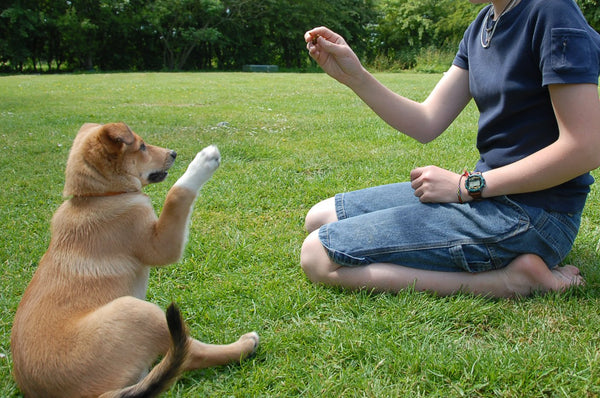 a young puppy doing treat training