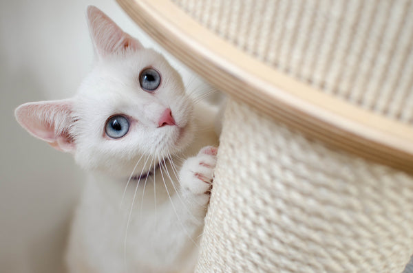 white cat scratching post