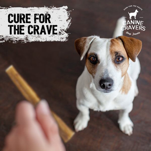 "Canine Cravers Single Ingredient Premium Beef 12"" Inch Bully Stick Pack of 5"