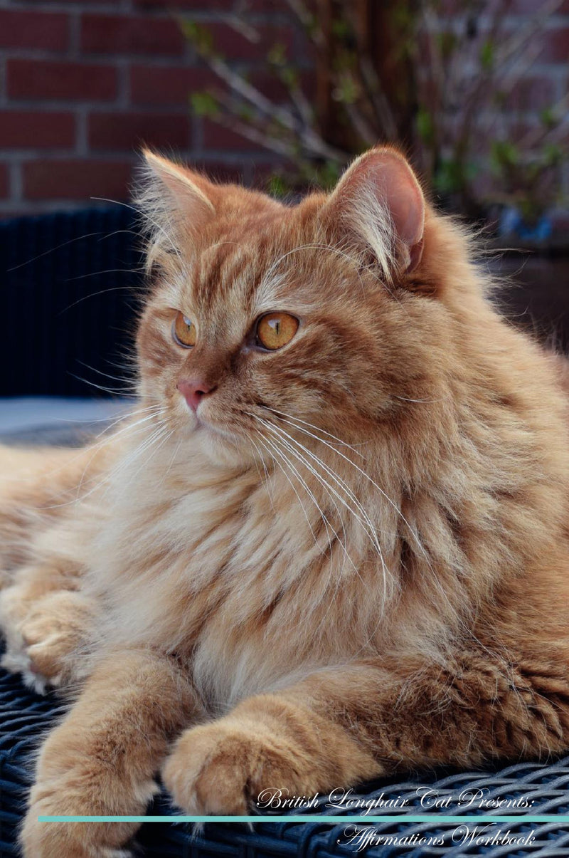 British Longhair Cat Affirmations Workbook British Longhair Cat Presents: Positive and Loving Affirmations Workbook. Includes: Mentoring Questions, Guidance, Supporting You.