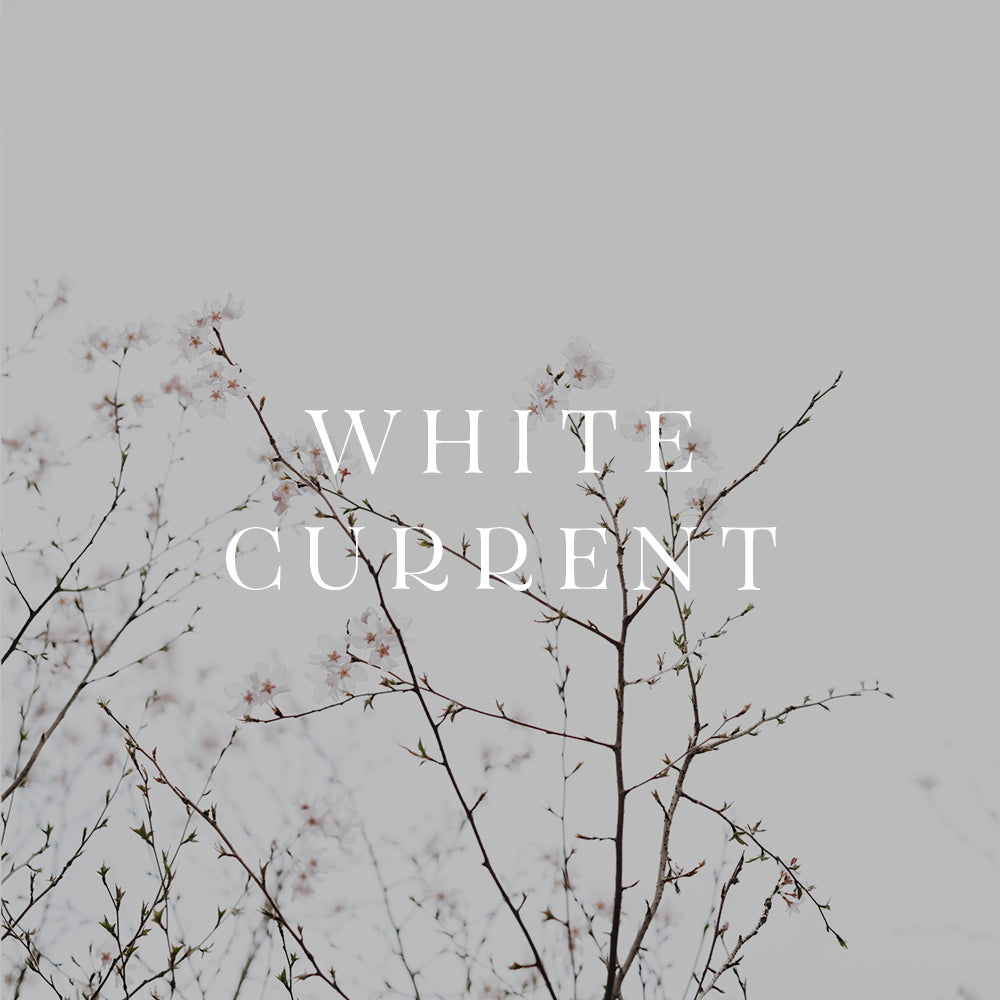 White Current