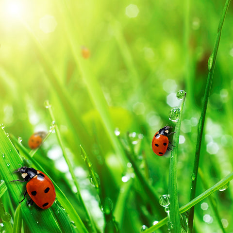 Good Bugs For Your Grass Five Bugs You Want To Live In