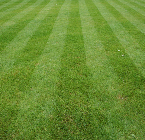 Mow Like The Pros How To Mow Stripes On Your Lawn Ego