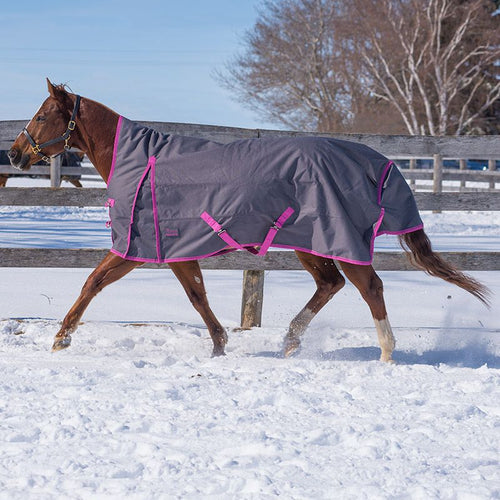 2020 Cobalt Turnout by Canadian Horsewear