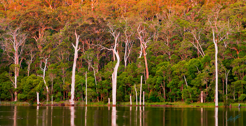 Lake Beedelup Karri Valley