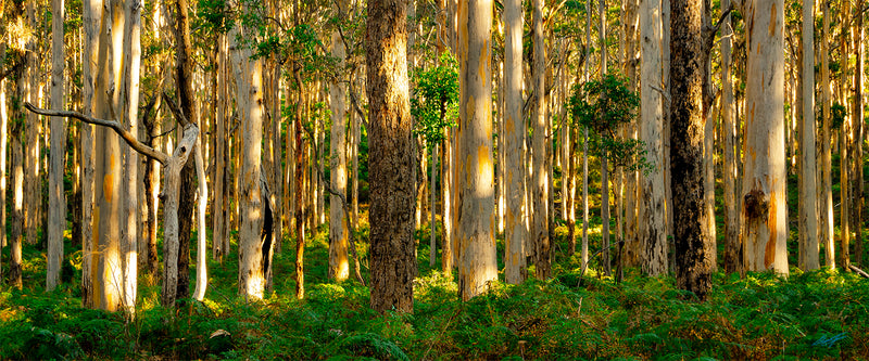 Boranup Forest Margaret River