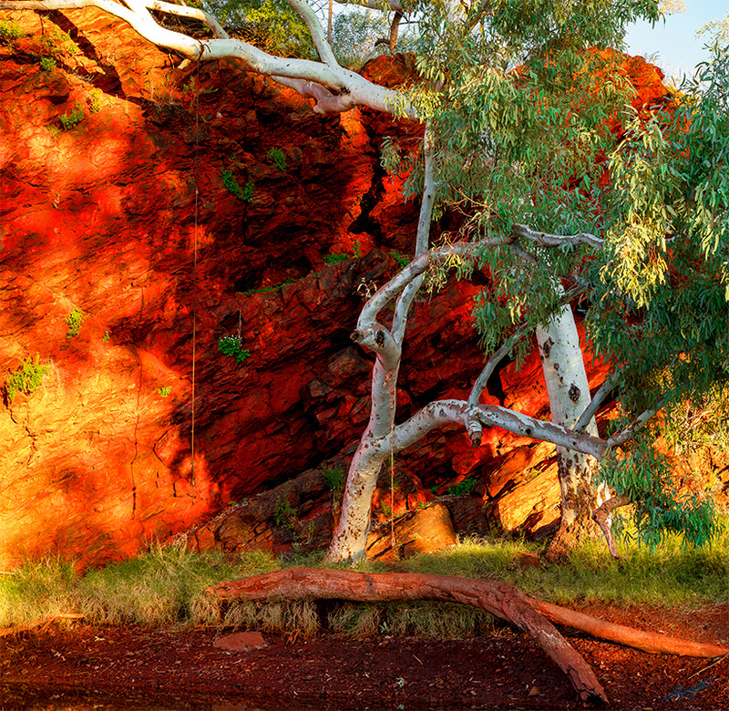 Tiger Eyes Pilbara Landscapes